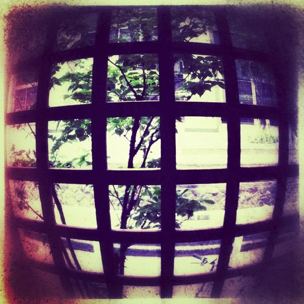 lattice - from Instagram