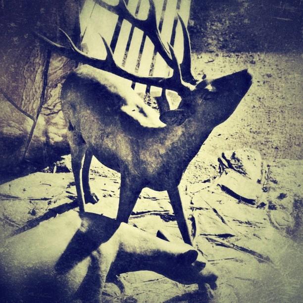 deer - from Instagram