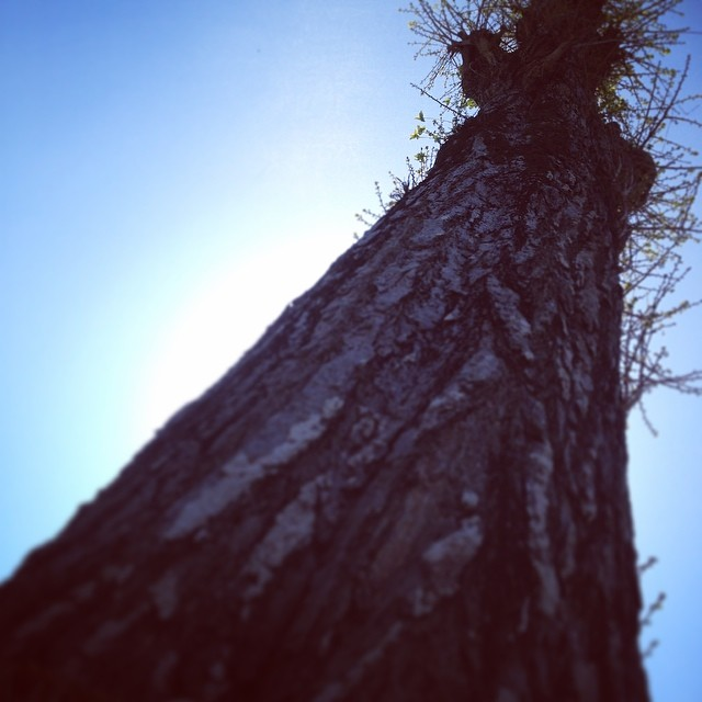 sacred tree - from Instagram