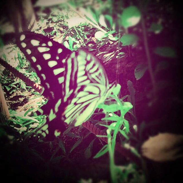 summer butterfly - from Instagram